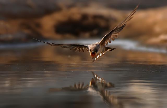 Fotografiile unei naturi demne de apreciat - Poza 21