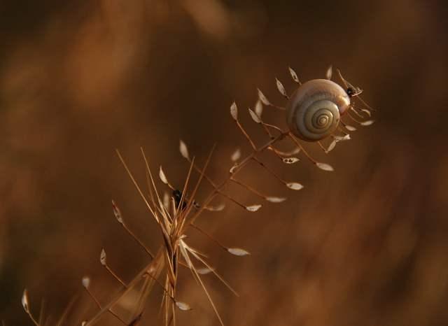 Fotografiile unei naturi demne de apreciat - Poza 9