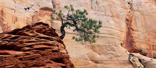 20 de fotografii cu natura de William Neill - Poza 1
