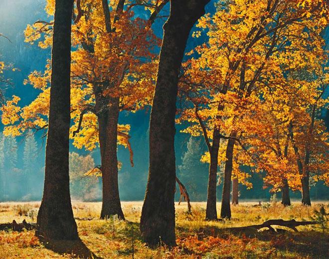 20 de fotografii cu natura de William Neill - Poza 14