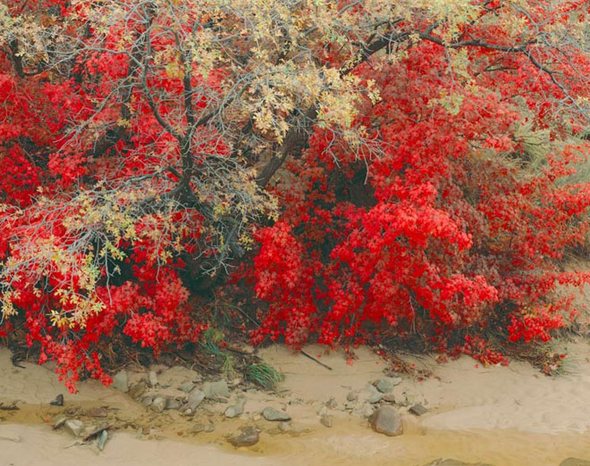 20 de fotografii cu natura de William Neill - Poza 15