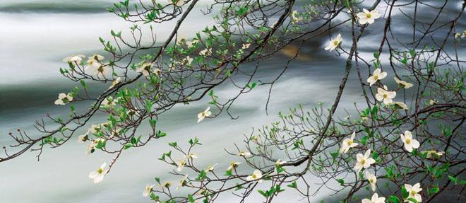 20 de fotografii cu natura de William Neill - Poza 19