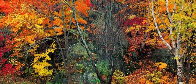 20 de fotografii cu natura de William Neill - Poza 2