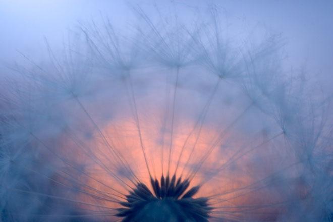 20 de fotografii cu natura de William Neill - Poza 5