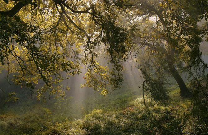 Natura in 25 de fotografii de Norbert Maier - Poza 11