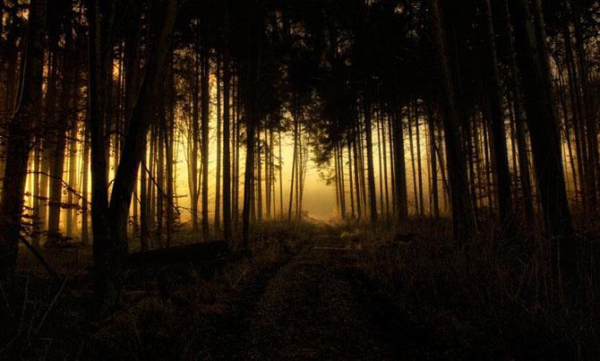 Natura in 25 de fotografii de Norbert Maier - Poza 15