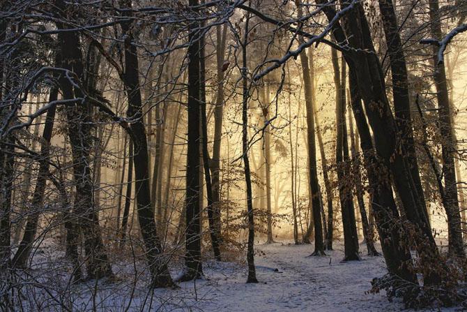 Natura in 25 de fotografii de Norbert Maier - Poza 17
