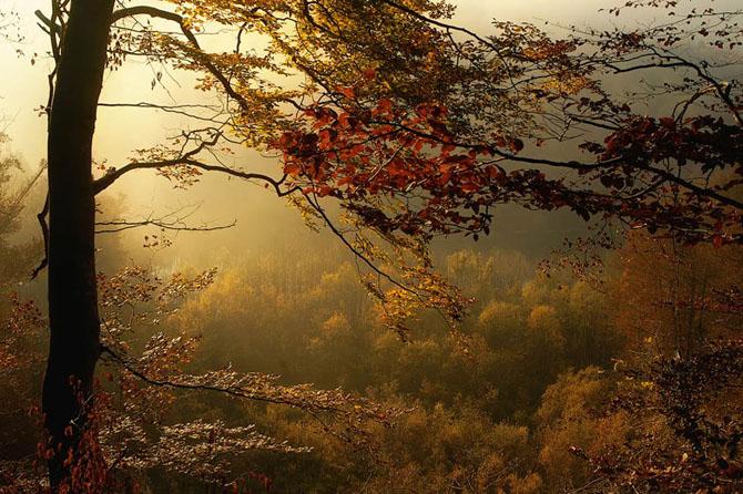 Natura in 25 de fotografii de Norbert Maier - Poza 2