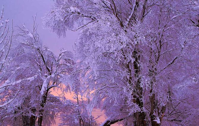 Natura in 25 de fotografii de Norbert Maier - Poza 22