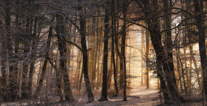 Natura in 25 de fotografii de Norbert Maier - Poza 24