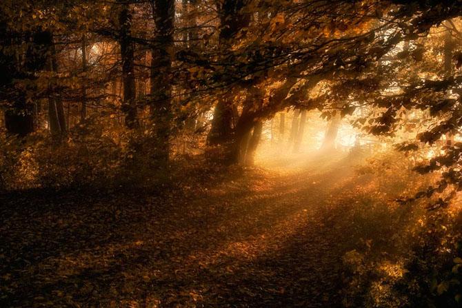 Natura in 25 de fotografii de Norbert Maier - Poza 3