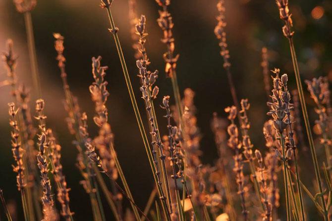 Natura in 25 de fotografii de Norbert Maier - Poza 4