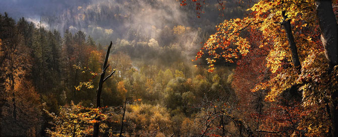 Natura in 25 de fotografii de Norbert Maier - Poza 6