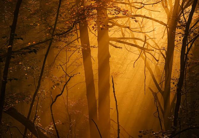 Natura in 25 de fotografii de Norbert Maier - Poza 8