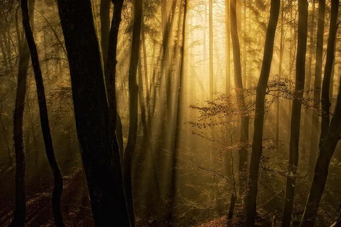 Natura in 25 de fotografii de Norbert Maier - Poza 9
