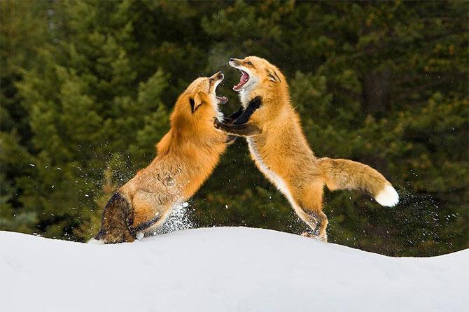 Natura in 30 de fotografii de Stephen Oachs - Poza 10