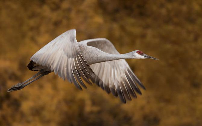 Natura in 30 de fotografii de Stephen Oachs - Poza 11