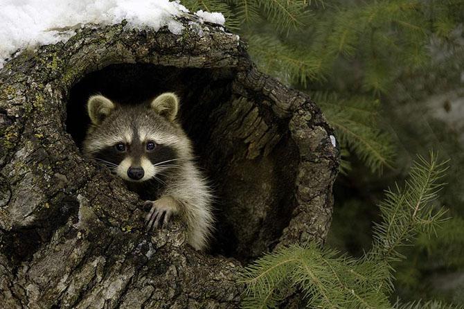 Natura in 30 de fotografii de Stephen Oachs - Poza 12