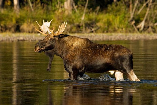 Natura in 30 de fotografii de Stephen Oachs - Poza 13