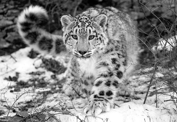 Natura in 30 de fotografii de Stephen Oachs - Poza 14