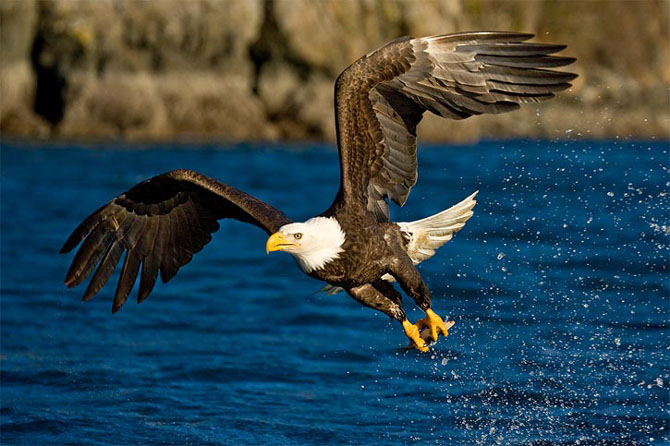 Natura in 30 de fotografii de Stephen Oachs - Poza 15