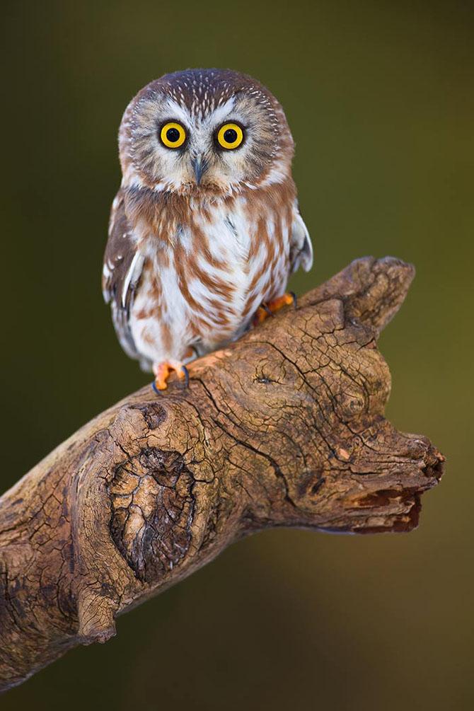 Natura in 30 de fotografii de Stephen Oachs - Poza 23