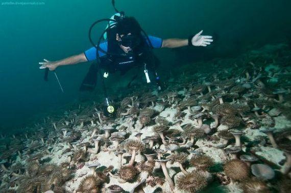 45 de poze subacvatice impresionante - Poza 2