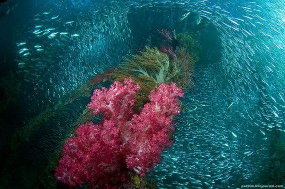 45 de poze subacvatice impresionante - Poza 6