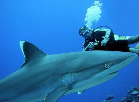45 de poze subacvatice impresionante - Poza 8