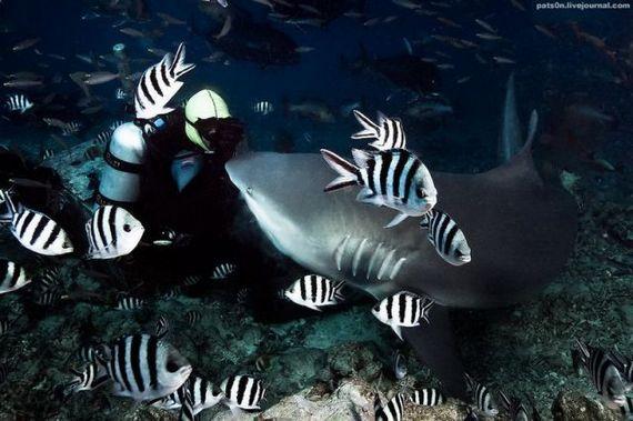 45 de poze subacvatice