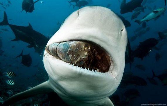 45 de poze subacvatice impresionante - Poza 14