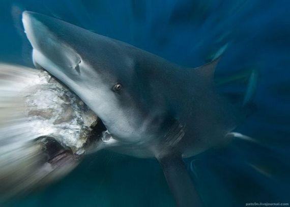 45 de poze subacvatice impresionante - Poza 15