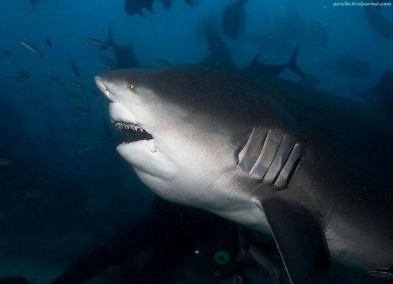 45 de poze subacvatice impresionante - Poza 16
