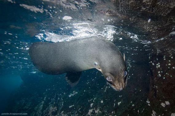 45 de poze subacvatice impresionante - Poza 17