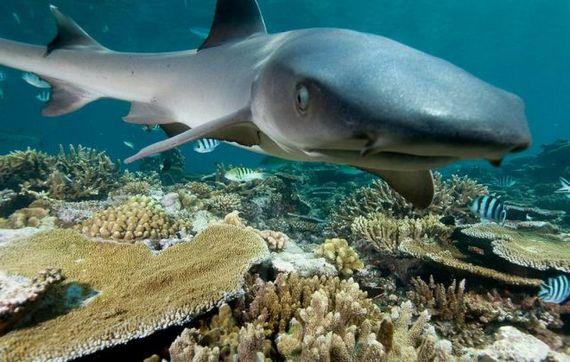 45 de poze subacvatice impresionante - Poza 20