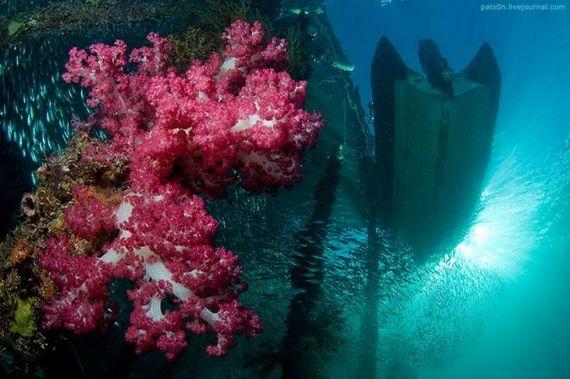 45 de poze subacvatice impresionante - Poza 21