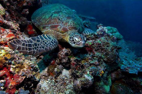 45 de poze subacvatice impresionante - Poza 23