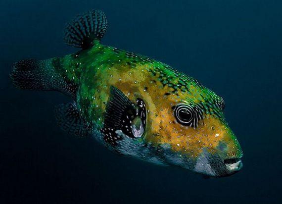 45 de poze subacvatice impresionante - Poza 24