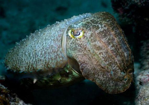 45 de poze subacvatice impresionante - Poza 25