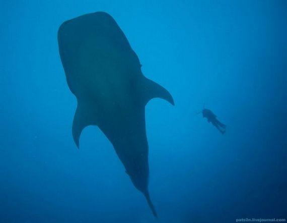 45 de poze subacvatice impresionante - Poza 26
