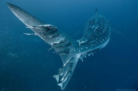 45 de poze subacvatice impresionante - Poza 27
