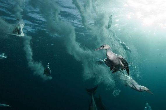 45 de poze subacvatice impresionante - Poza 33