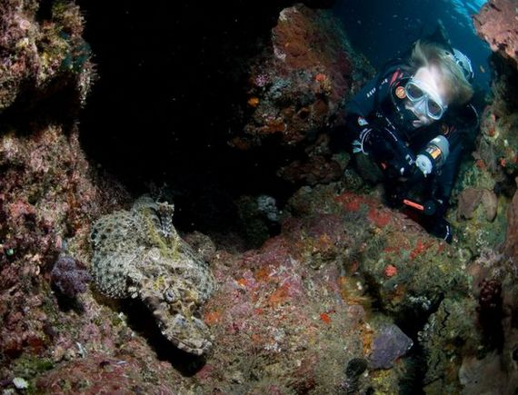 45 de poze subacvatice impresionante - Poza 34