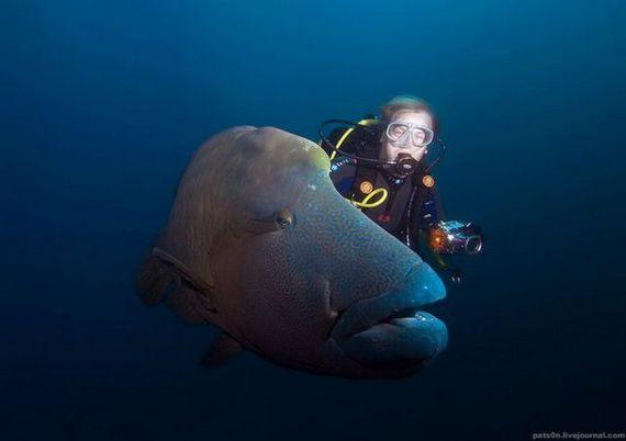 45 de poze subacvatice impresionante - Poza 36