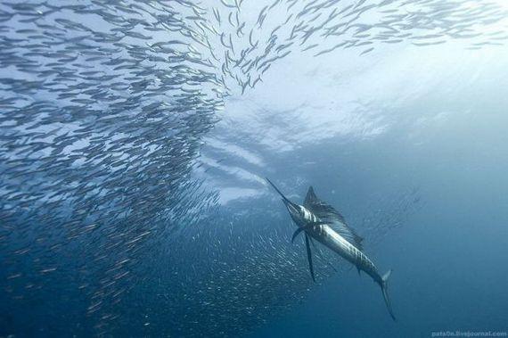 45 de poze subacvatice impresionante - Poza 37