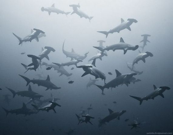 45 de poze subacvatice impresionante - Poza 41
