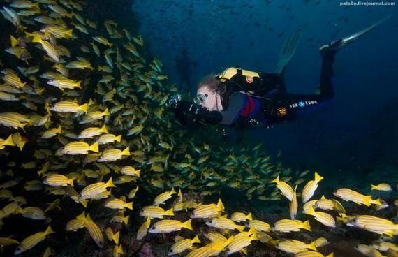45 de poze subacvatice impresionante - Poza 43