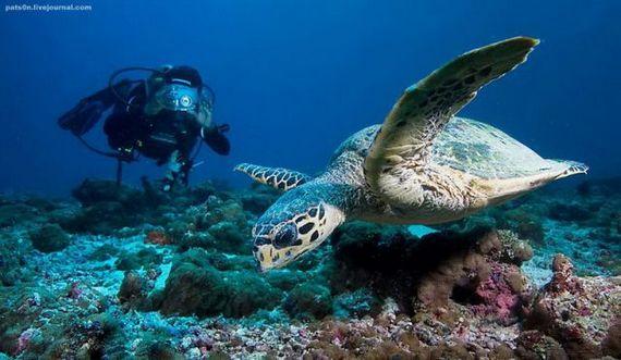 45 de poze subacvatice impresionante - Poza 44