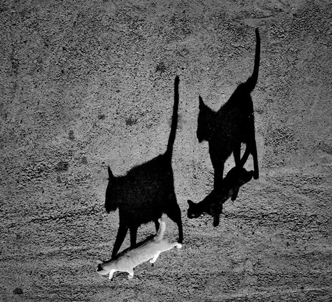 30 de fotografii minunate de Sorin Onisor - Poza 4