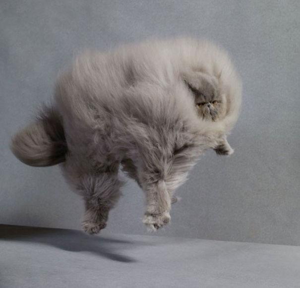 Cele mai pufoase pisici din lume - Poza 2